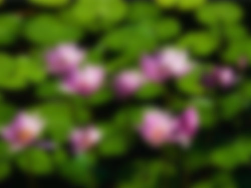 Water-lilies-blur.jpg